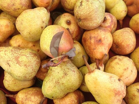 close up of pears at the farmer's market