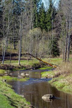 River in springtime.