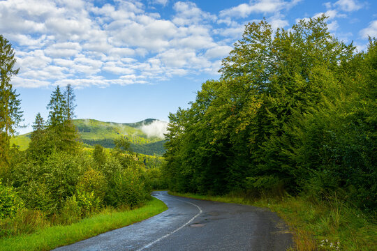 country road through forest in mountains. beautiful fresh morning in early autumn. path winding in to the distance. wet asphalt. cloud on the distant summit. travel backcountry concept
