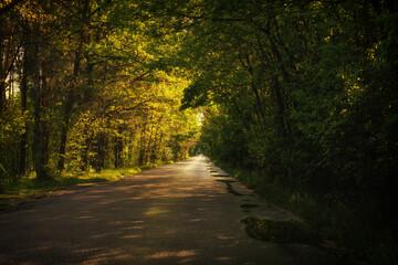 Droga w stronę słońca - fototapety na wymiar