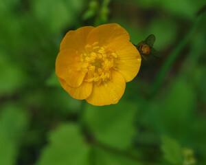Fototapeta dziki kwiat w lesie obraz