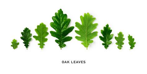 Green oak leaves creative banner.