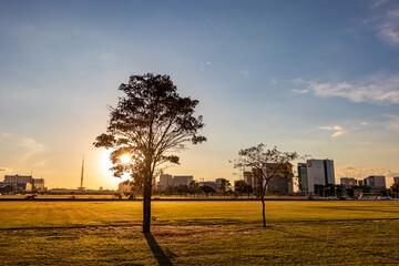 Obraz Pôr do sol entre árvore na Esplanada dos Ministérios em Brasília, capital do Brasil. - fototapety do salonu