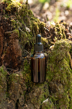 Natural cosmetic skincare serum essence blank bottle on forest background, vertical. Concept of eco bio organic beauty product. Tree bark and mosses on backdrop