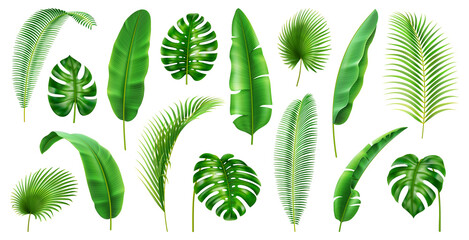 Fototapeta Exotic flora and vegetation of rainforests and jungles, isolated tropical leaves. Set of banana and palmetto, palm and monstera branches. Botany and decoration in realistic 3d cartoon vector obraz