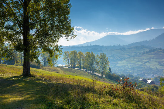 trees on the grassy hill. countryside mountain scenery in early autumn. wonderful nature landscape on a bright morning. village in the distant valley. travel back country concept