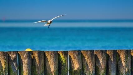 Mewa w locie nad plażą i morzem