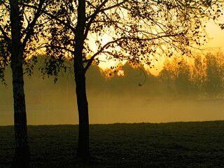 Fototapeta Wschód słońca nad leśną polaną . obraz