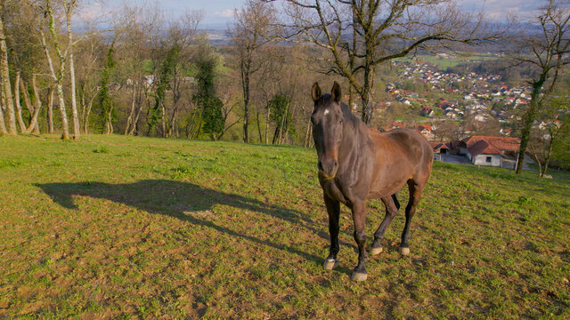 AERIAL: Rural landscape surrounds playful mare standing in middle of a field.