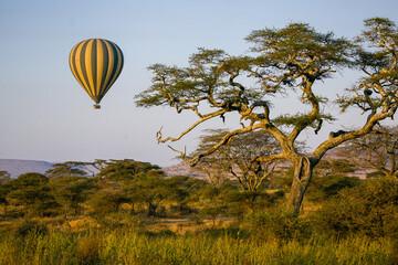 Hot air balloon floating over an acacia tree in Serengeti National Park.