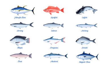 Obraz Commercial fish species set. Vector illustration cartoon flat icon collection isolated on white background. - fototapety do salonu