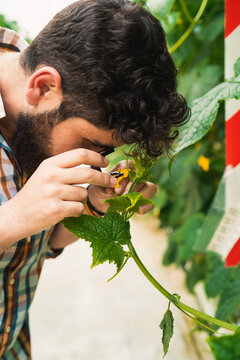 Man checking on plants with magnifying glass