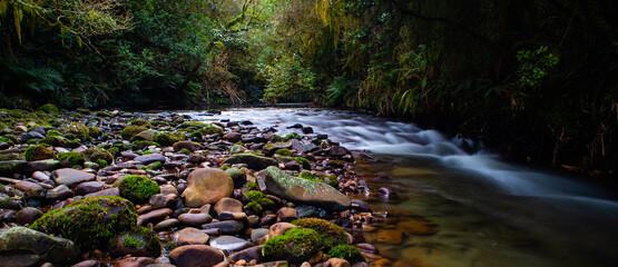 Fototapeta Rain forest steam obraz