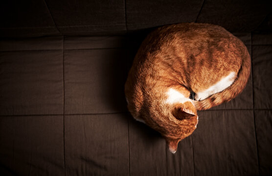 Young Ginger Cat lies on a sofa. From top