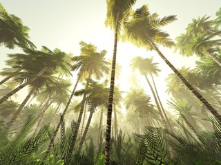 Obraz Jungle in the morning in the sun, palm trees in the fog, tropical forest in the haze, 3D rendering - fototapety do salonu