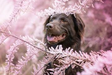 Obraz Pies w krzewie tamaryszku - fototapety do salonu