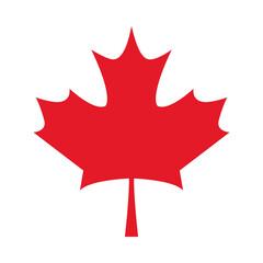 Fototapeta canadian maple leaf obraz