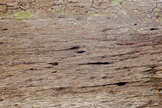 Tree bark texture woodbackground