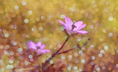 Obraz Mały fioletowy kwiat z tłem w bokeh - fototapety do salonu