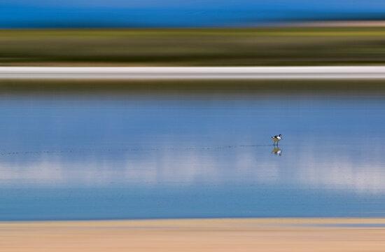 Loneliness in the lagoon. Solitary bird in the Natural Reserve of the Lagunas El Longar, Altillo Grande and Altillo Chica, of Lillo, in Toledo