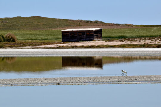 Bird House. Reflection of a birdwatching hut in the water of the lagoon of the Lagunas de El Longar Natural Reserve, located in Lillo, Toledo, in Spain