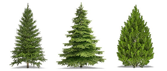 Trees Isolated on white Background. Pine Tree, White Spruce, Bosnian Pine. High Resolution