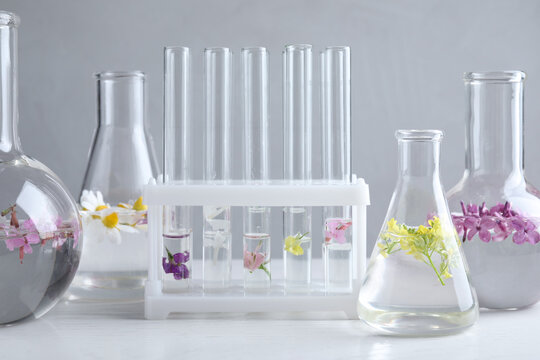 Laboratory glassware with flowers on white wooden table. Extracting essential oil for perfumery and cosmetics