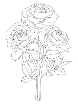 花のぬり絵 薔薇の花
