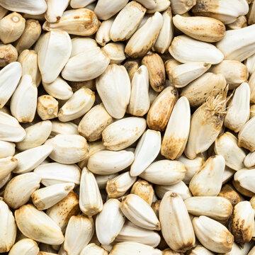 safflower seeds close up