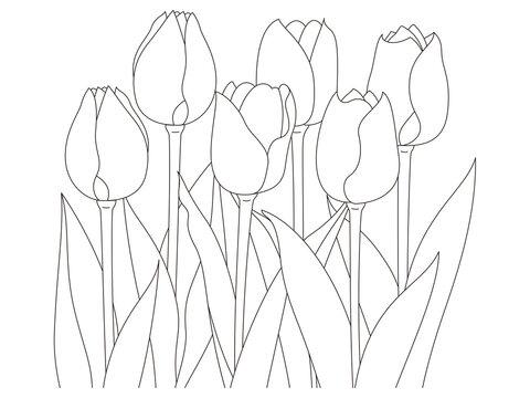 花のぬり絵 並んだチューリップの花