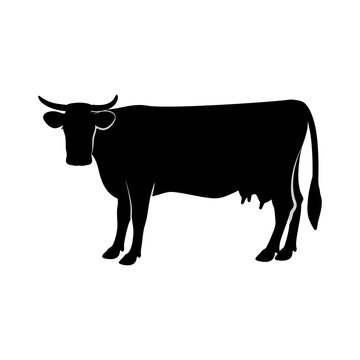 Silhouette of a cow. Vector illustration. White isolated background.