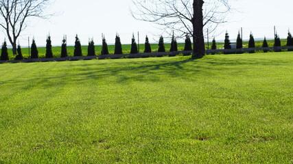 Fototapeta Wiosenny trawnik i krzewy wokoło domu z dala od miasta  obraz