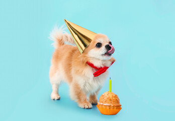 Cute chihuahua dog with birthday cake on color background - fototapety na wymiar