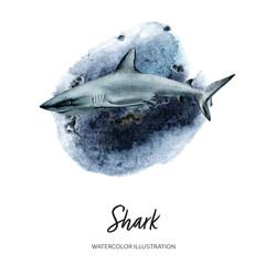 Fototapeta Invitation design template with white shark watercolor hand drawn illustration on splash background texture. obraz