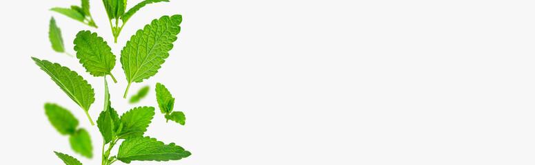 Fototapeta Fresh flying green mint leaves, lemon balm, melissa, peppermint isolated on light gray background flat lay. Mint leaf texture, pattern. Spearmint herbs. Tea ingredient. Ecology organic natural layout obraz