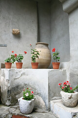 Czerwone begonie w donicach na białym tle.