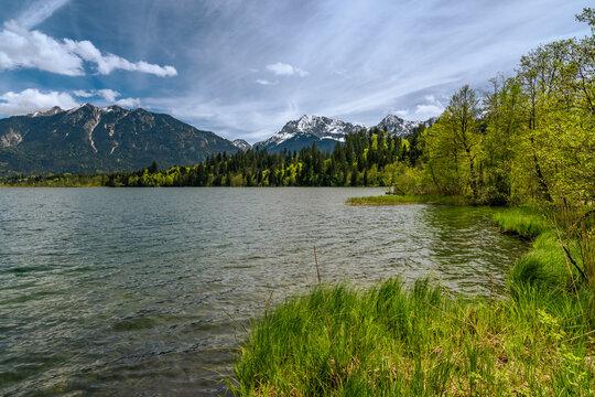 Grünes Naturufer am Barmsee bei Krün in Bayern