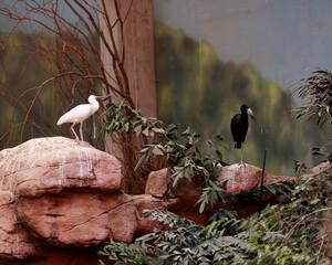 Obraz ptaki na kamieniach - fototapety do salonu