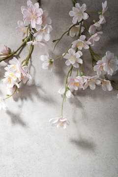 Light pink cherry blossom on gray surface