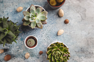 Obraz Succulent and cactus plants on concrete stone background. Minimal floral flat lay - fototapety do salonu
