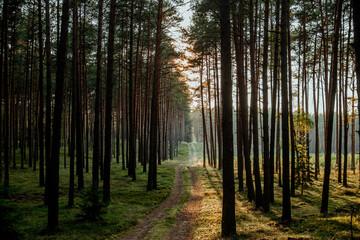 Zachód słońca w lesie - fototapety na wymiar