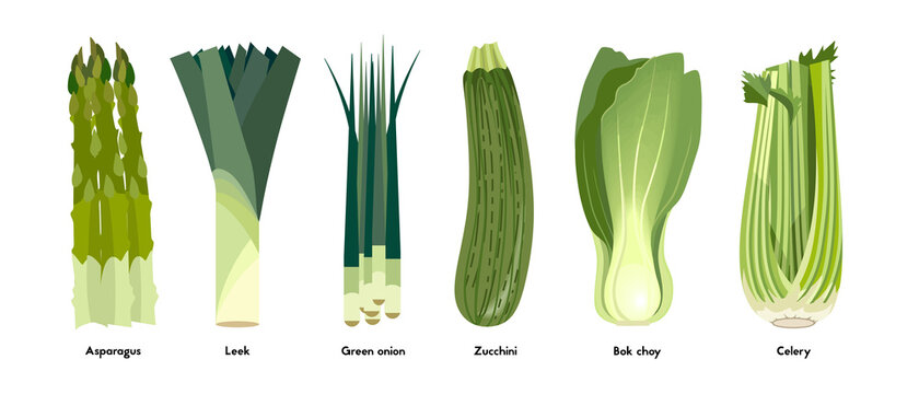 Set of green vegetables. Colorful vector illusteration.
