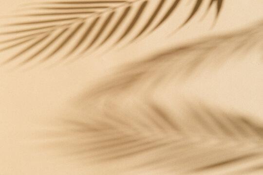 summer background palm tree shadows on beige