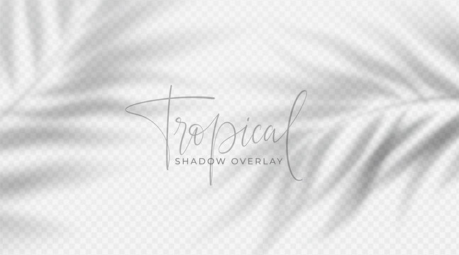 Realistic transparent shadow from a leaf of a palm tree on the white background. Tropical leaves shadow. Mockup with palm leaves shadow. Vector illustration