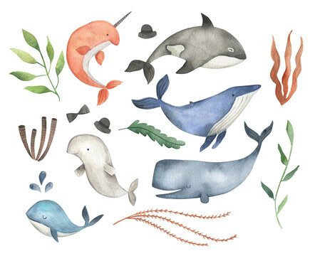 Sea animals  whale watercolor illustration set