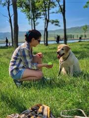 Fototapeta View Of Dog On Field obraz