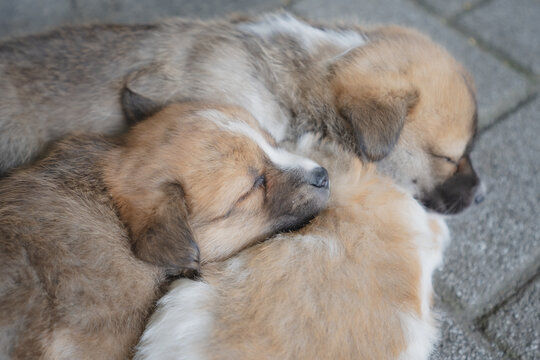 귀여운 아기 강아지들의 여유로운 낮잠