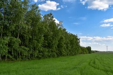 Duże zielone drzewa i zielona trawa. - fototapety na wymiar