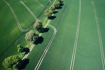 Obraz krajobraz pole z drzewami lato dron - fototapety do salonu