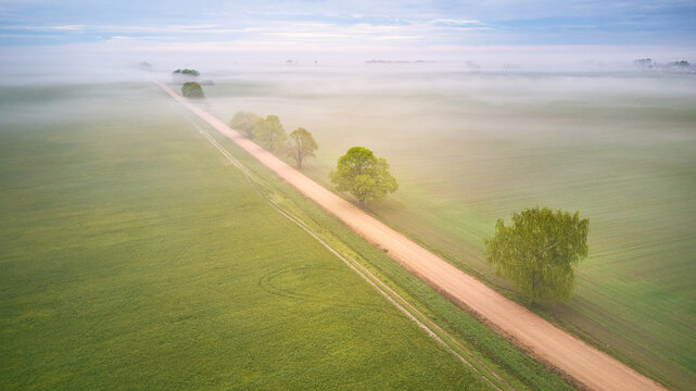 Aerial view of rural dirt road and trees covered by fog. Early misty morning. Spring summer fields. Rainy overcast moody weather